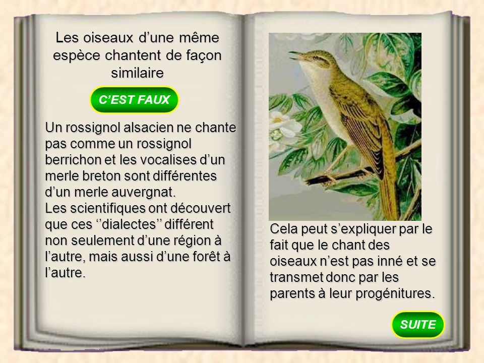 Les oiseaux d'une même espèce chantent de façon similaire