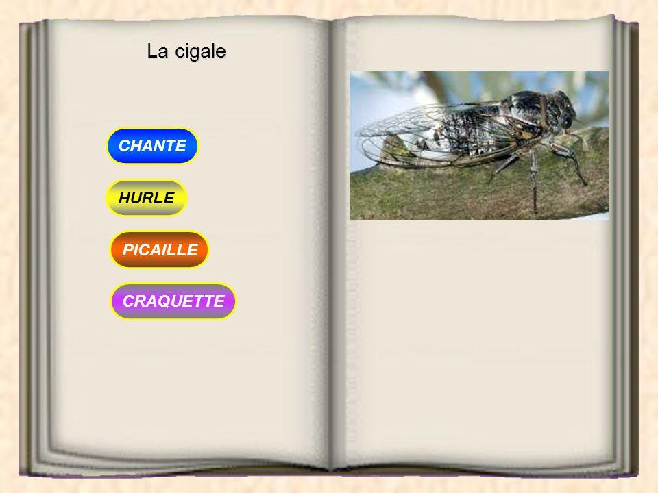 La cigale CHANTE HURLE PICAILLE CRAQUETTE