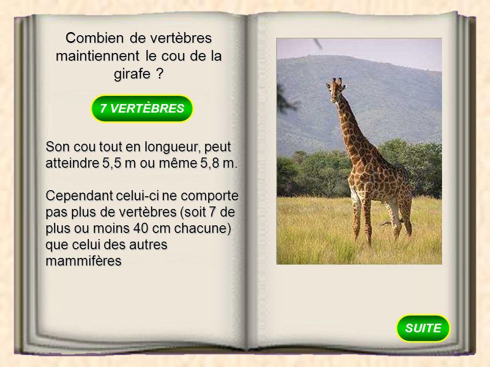Combien de vertèbres maintiennent le cou de la girafe