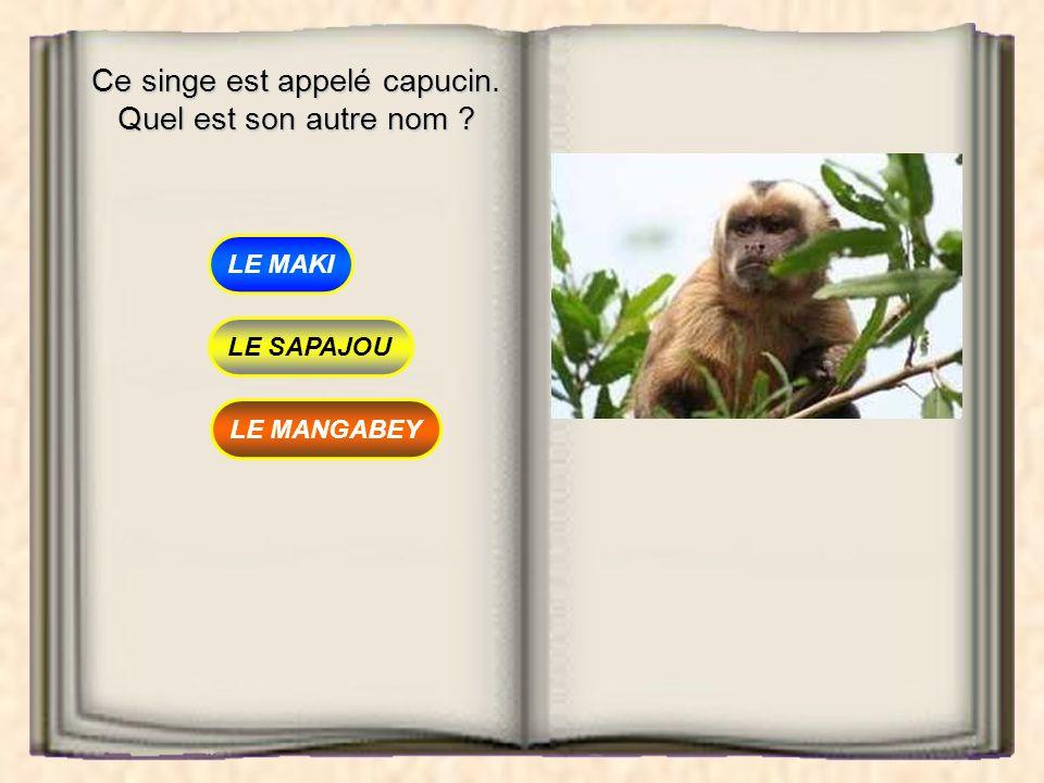 Ce singe est appelé capucin. Quel est son autre nom