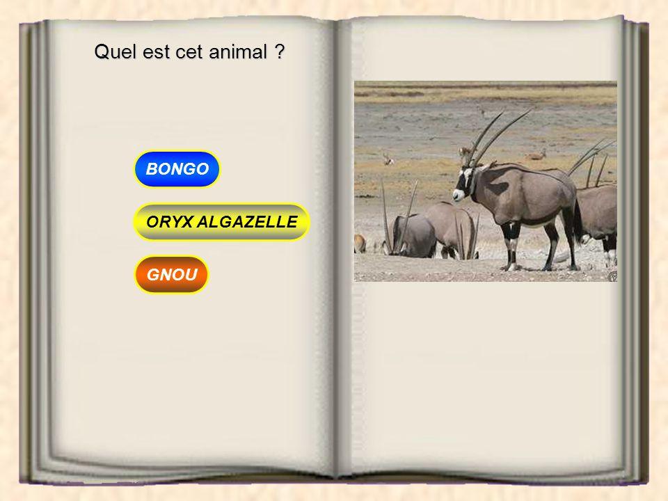 Quel est cet animal BONGO ORYX ALGAZELLE GNOU