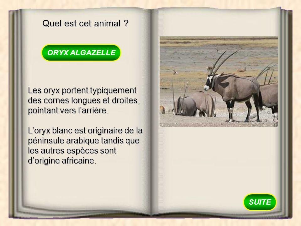 Quel est cet animal ORYX ALGAZELLE. Les oryx portent typiquement des cornes longues et droites, pointant vers l'arrière.