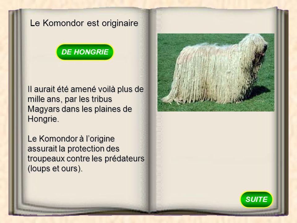 Le Komondor est originaire