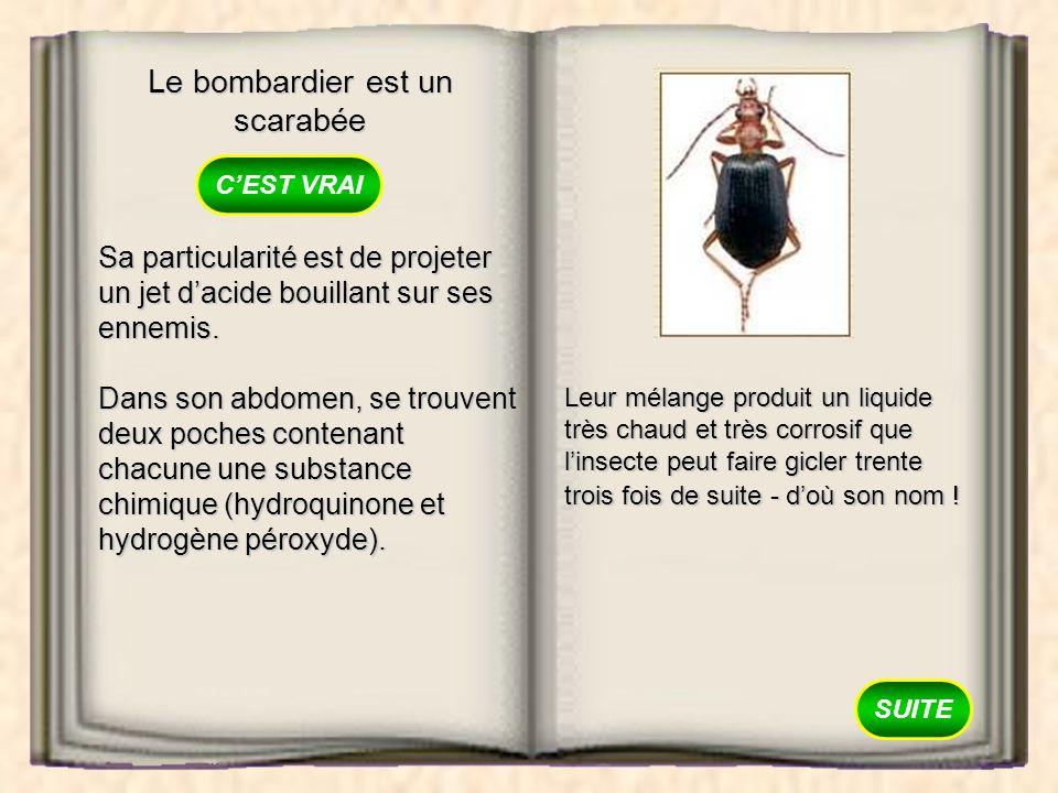 Le bombardier est un scarabée
