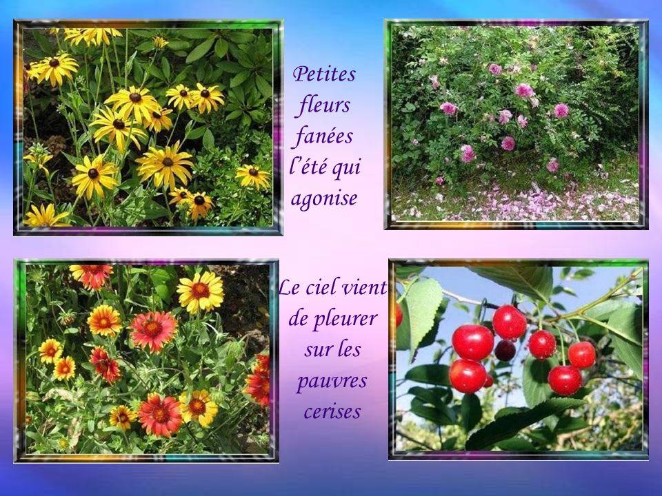 Petites fleurs fanées l'été qui agonise