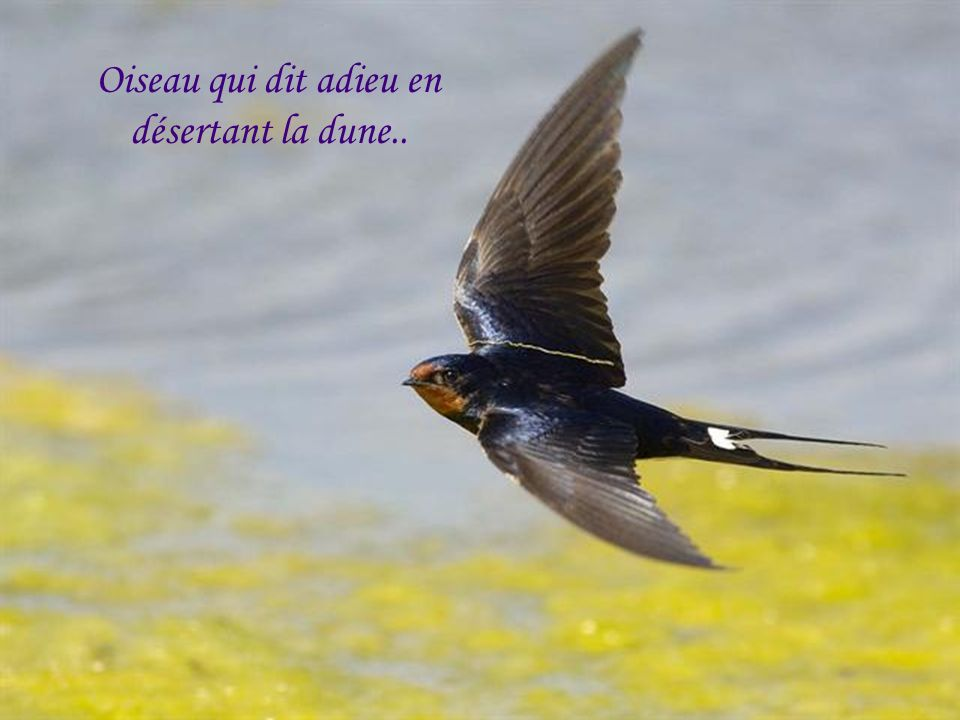Oiseau qui dit adieu en désertant la dune..