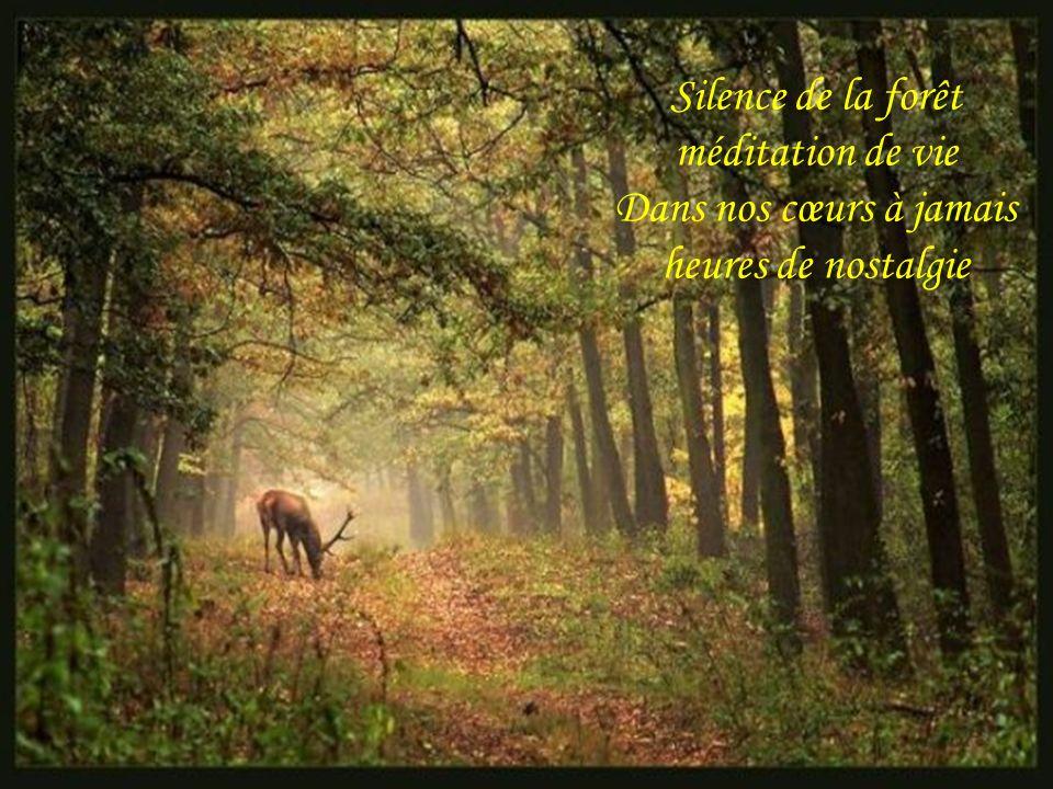 Silence de la forêt méditation de vie Dans nos cœurs à jamais heures de nostalgie