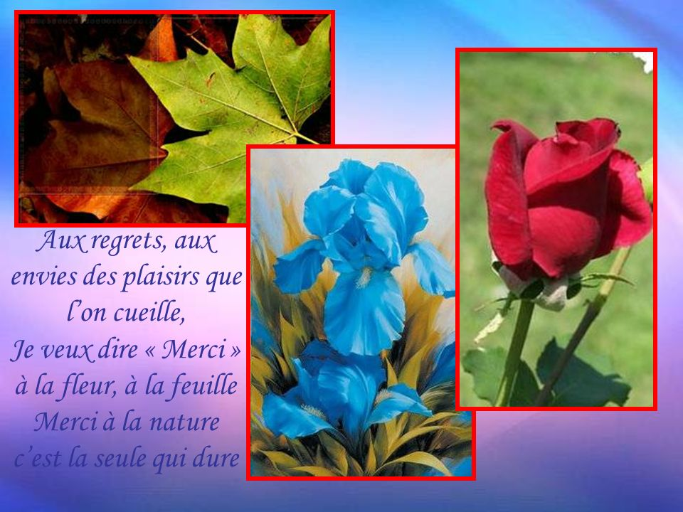 Aux regrets, aux envies des plaisirs que l'on cueille, Je veux dire « Merci » à la fleur, à la feuille Merci à la nature c'est la seule qui dure