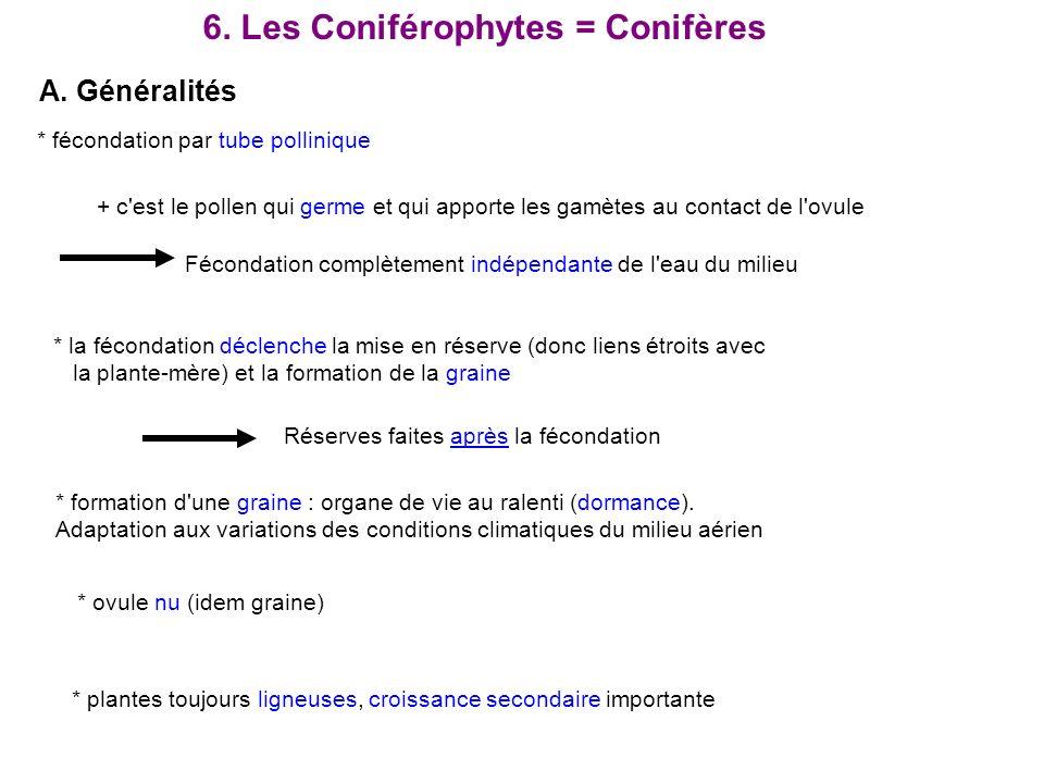 6. Les Coniférophytes = Conifères