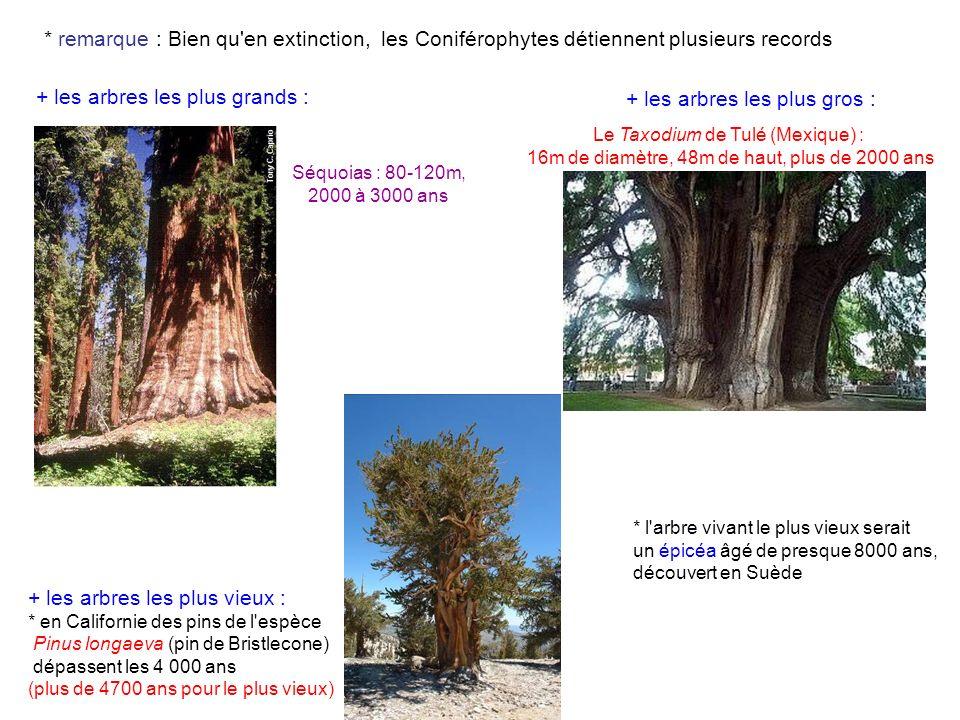 + les arbres les plus grands : + les arbres les plus gros :