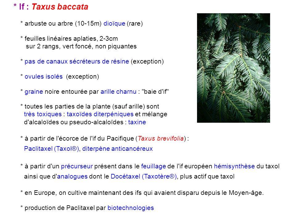 * If : Taxus baccata * arbuste ou arbre (10-15m) dioïque (rare)