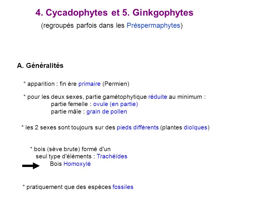 4. Cycadophytes et 5. Ginkgophytes