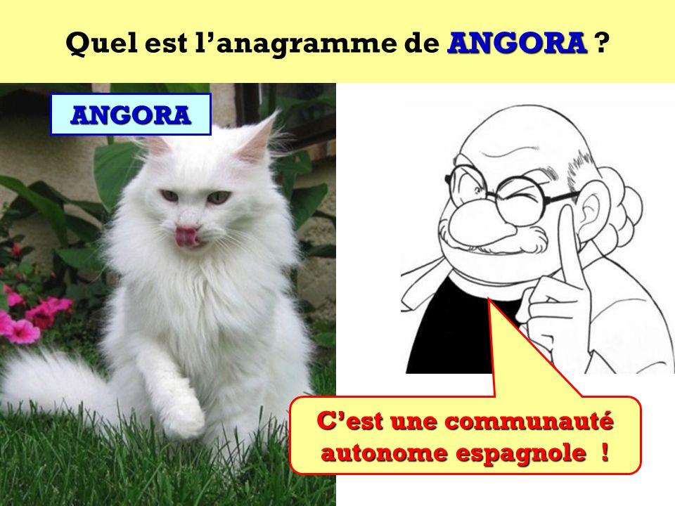 Quel est l'anagramme de ANGORA