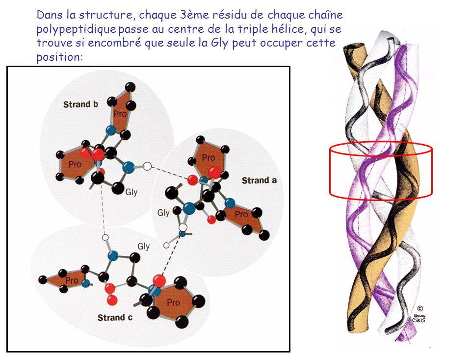 Dans la structure, chaque 3ème résidu de chaque chaîne polypeptidique passe au centre de la triple hélice, qui se trouve si encombré que seule la Gly peut occuper cette position: