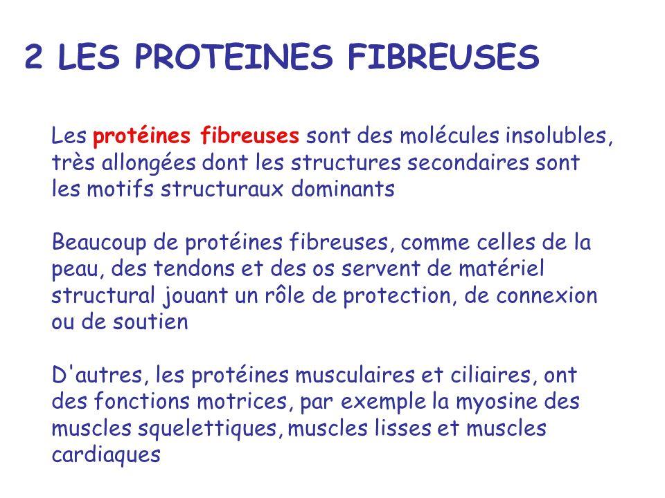 2 LES PROTEINES FIBREUSES
