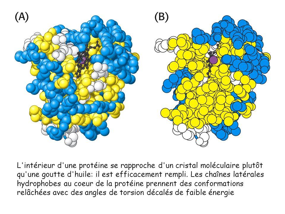 L intérieur d une protéine se rapproche d un cristal moléculaire plutôt qu une goutte d huile: il est efficacement rempli.