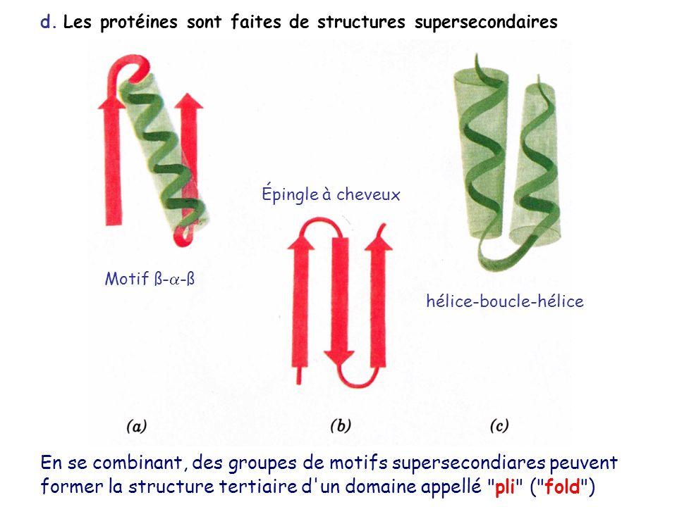 d. Les protéines sont faites de structures supersecondaires