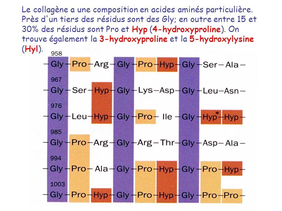 Le collagène a une composition en acides aminés particulière