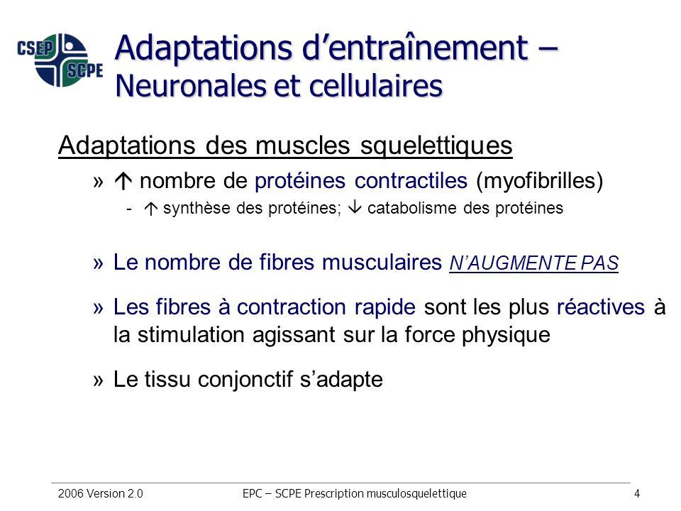 Adaptations d'entraînement – Neuronales et cellulaires