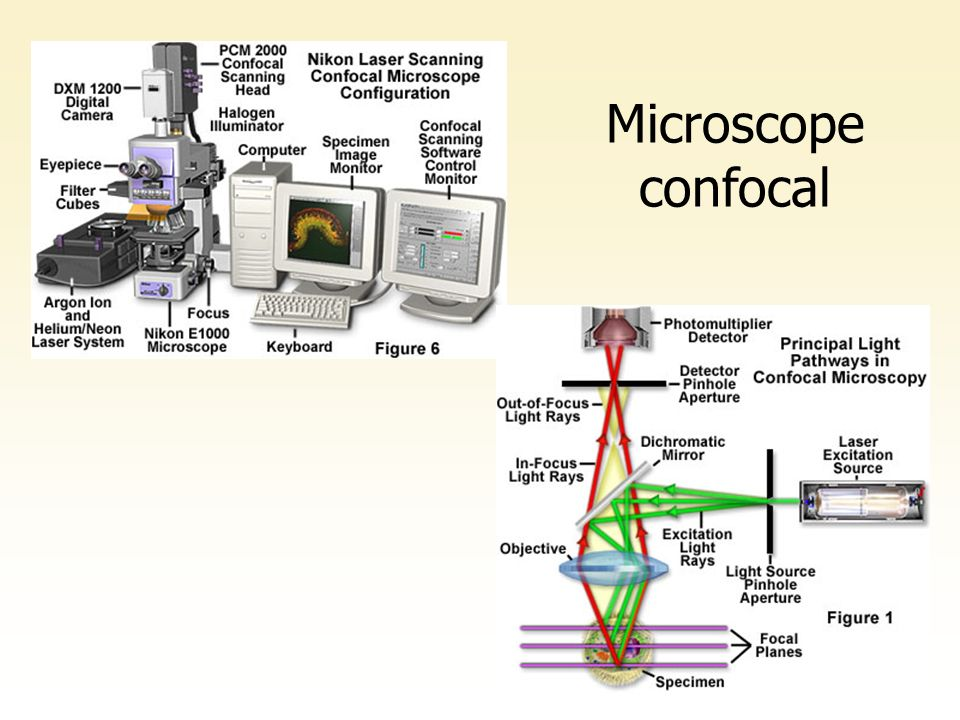 Microscope confocal