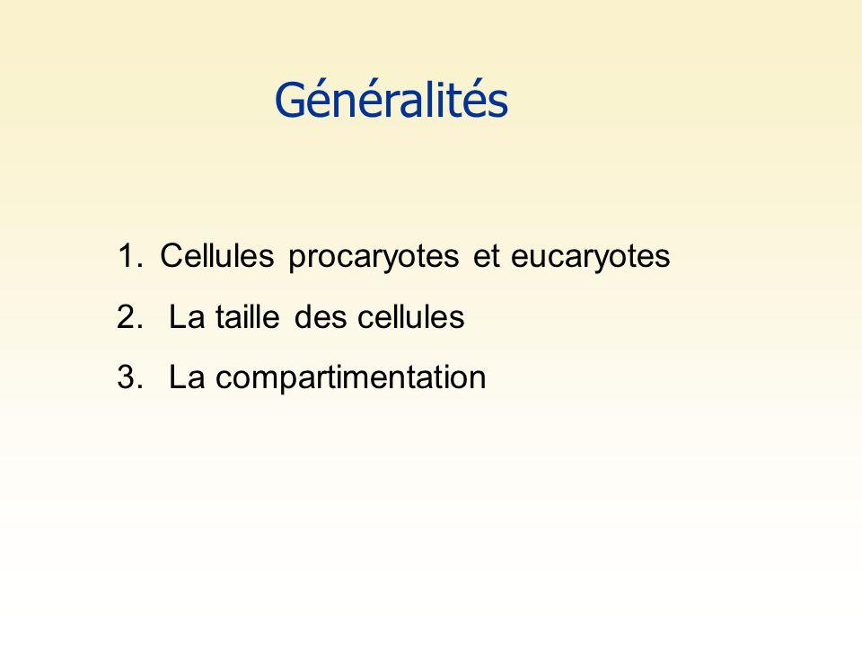 Généralités Cellules procaryotes et eucaryotes La taille des cellules
