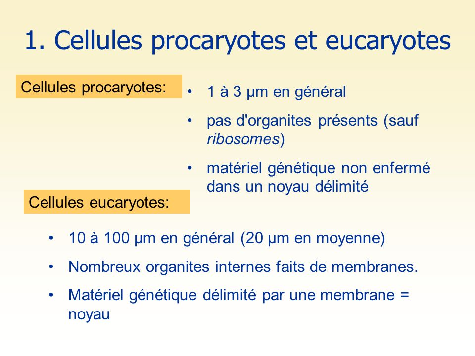 1. Cellules procaryotes et eucaryotes