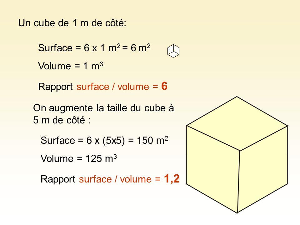 Un cube de 1 m de côté: Surface = 6 x 1 m2 = 6 m2. Volume = 1 m3. Rapport surface / volume = 6. On augmente la taille du cube à 5 m de côté :
