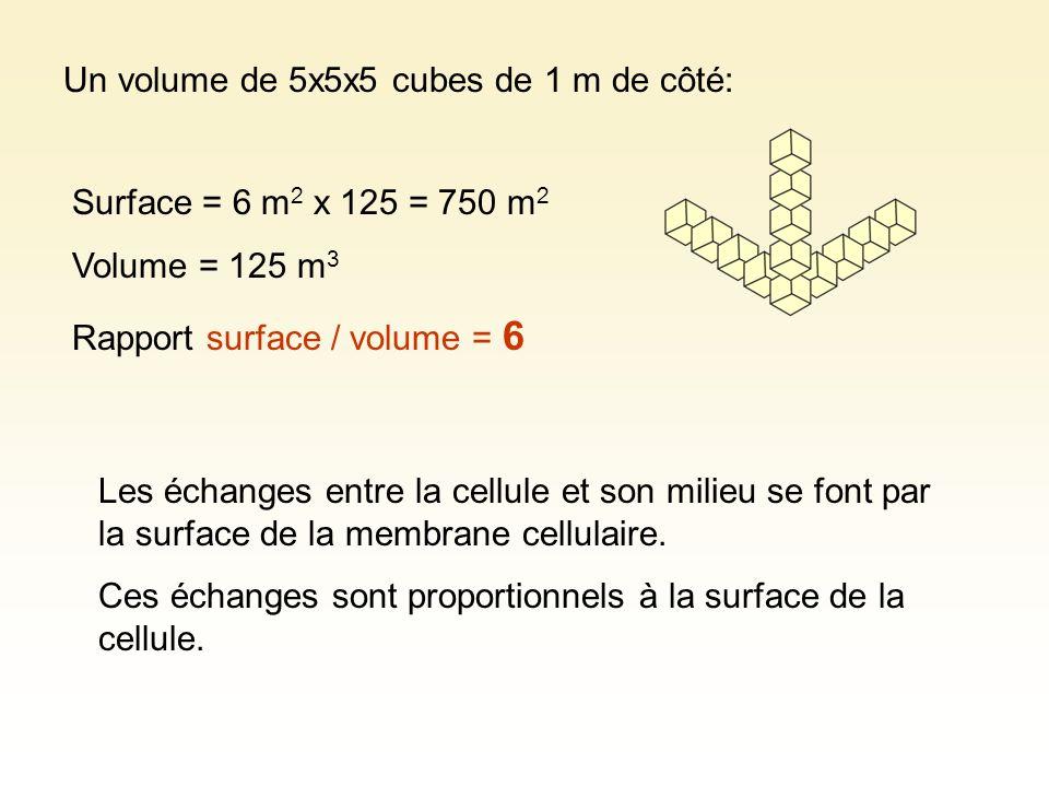 Un volume de 5x5x5 cubes de 1 m de côté: