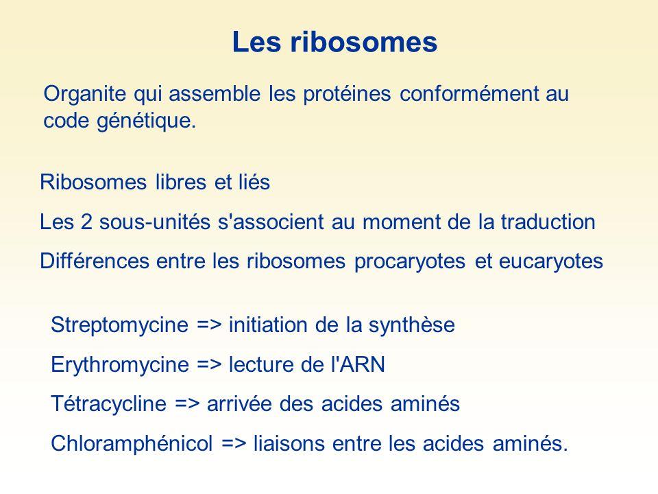 Les ribosomes Organite qui assemble les protéines conformément au code génétique. Ribosomes libres et liés.