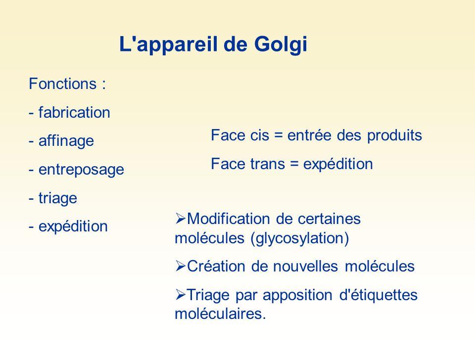 L appareil de Golgi Fonctions : fabrication affinage entreposage