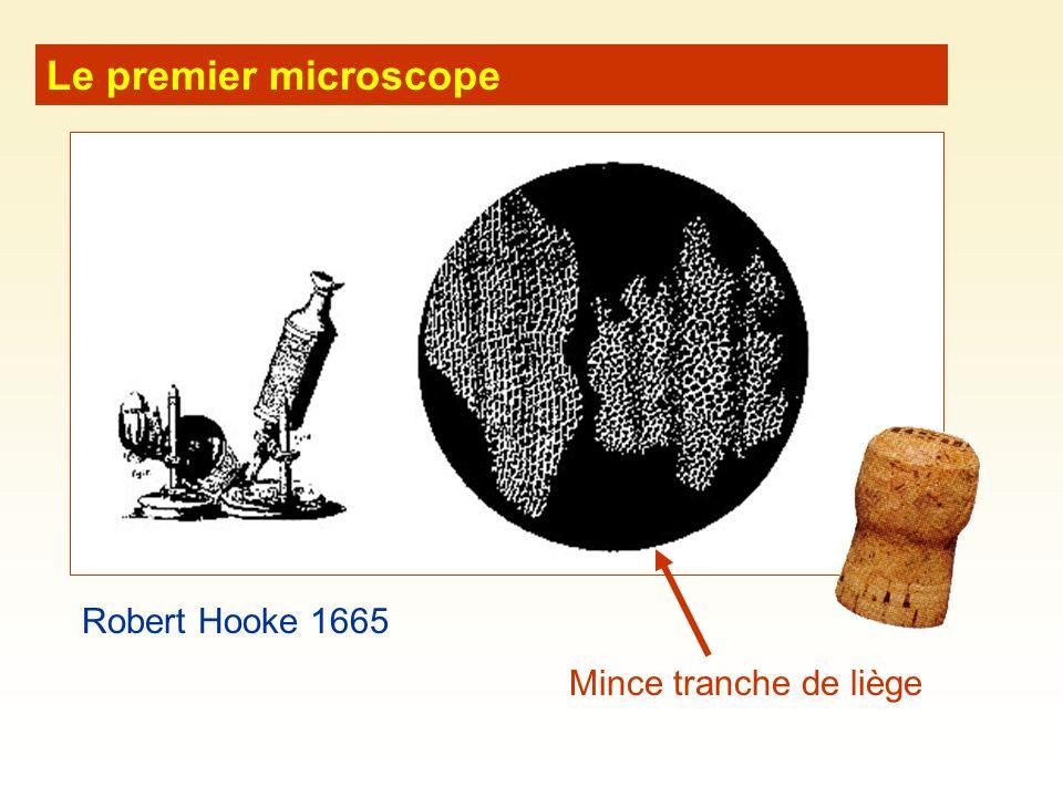 Le premier microscope Mince tranche de liège Robert Hooke 1665
