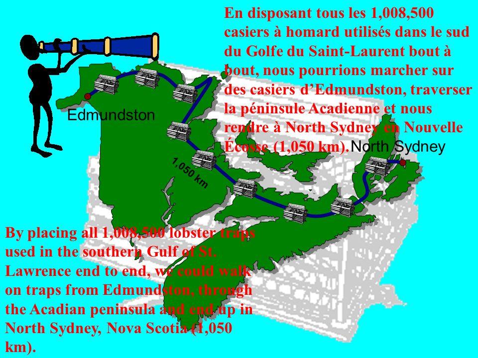 En disposant tous les 1,008,500 casiers à homard utilisés dans le sud du Golfe du Saint-Laurent bout à bout, nous pourrions marcher sur des casiers d'Edmundston, traverser la péninsule Acadienne et nous rendre à North Sydney en Nouvelle Écosse (1,050 km).
