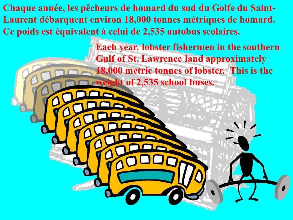 Chaque année, les pêcheurs de homard du sud du Golfe du Saint- Laurent débarquent environ 18,000 tonnes métriques de homard. Ce poids est équivalent à celui de 2,535 autobus scolaires.