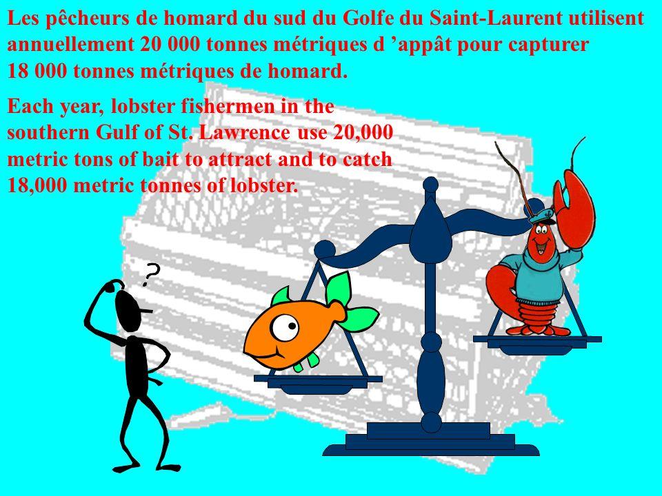 Les pêcheurs de homard du sud du Golfe du Saint-Laurent utilisent annuellement 20 000 tonnes métriques d 'appât pour capturer