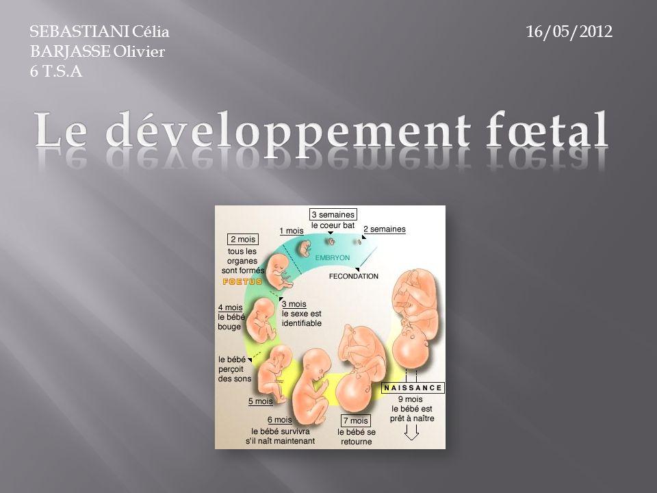 Le développement fœtal