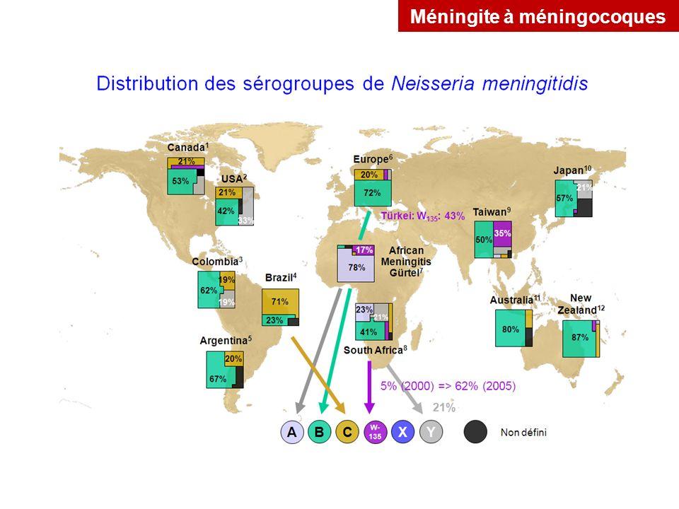 Méningite à méningocoques