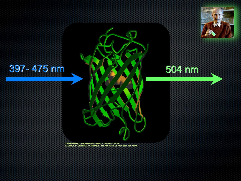 397- 475 nm 504 nm. J.Wiedenmann, S. Ivanchenko, F. Oswald, F. Schmitt, C. R!cker,