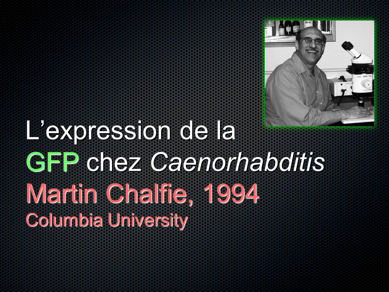 L'expression de la GFP chez Caenorhabditis Martin Chalfie, 1994 Columbia University