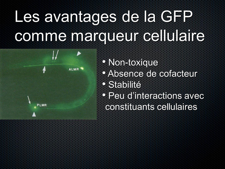 Les avantages de la GFP comme marqueur cellulaire