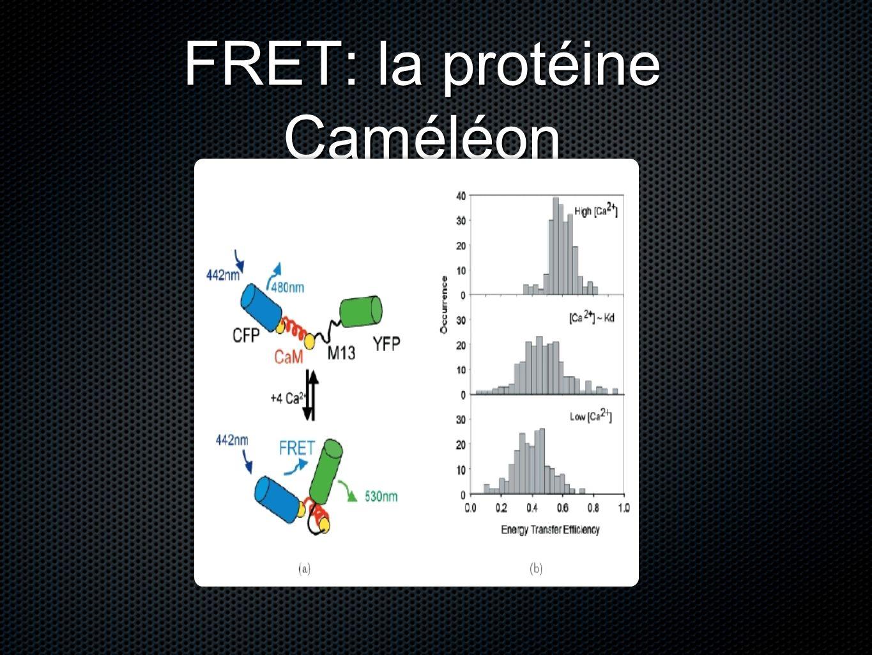 FRET: la protéine Caméléon