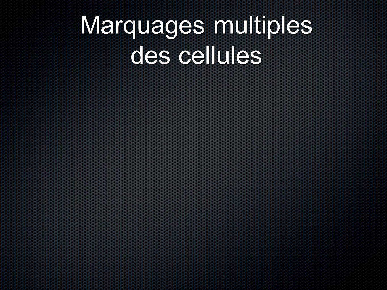 Marquages multiples des cellules