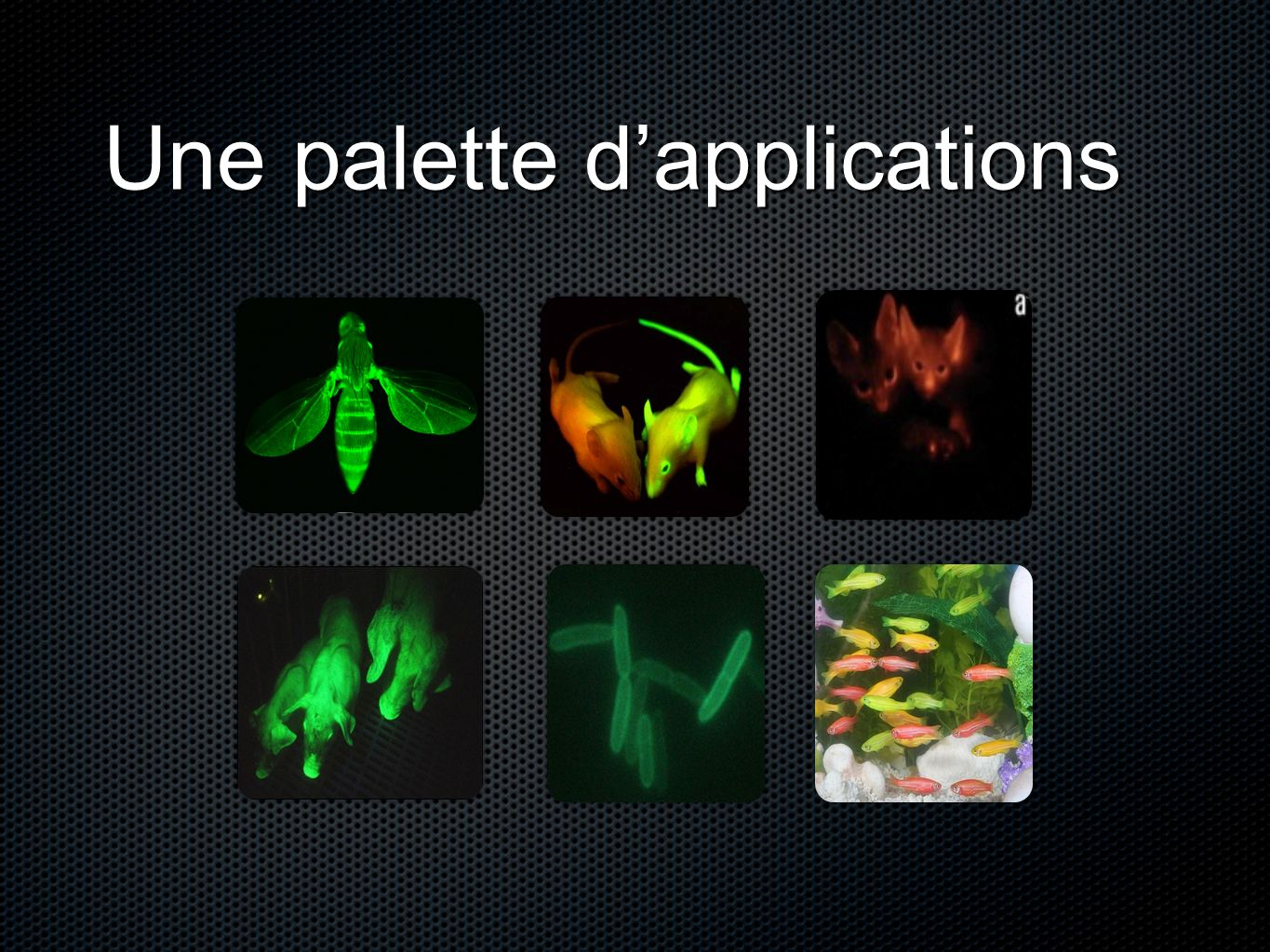 Une palette d'applications