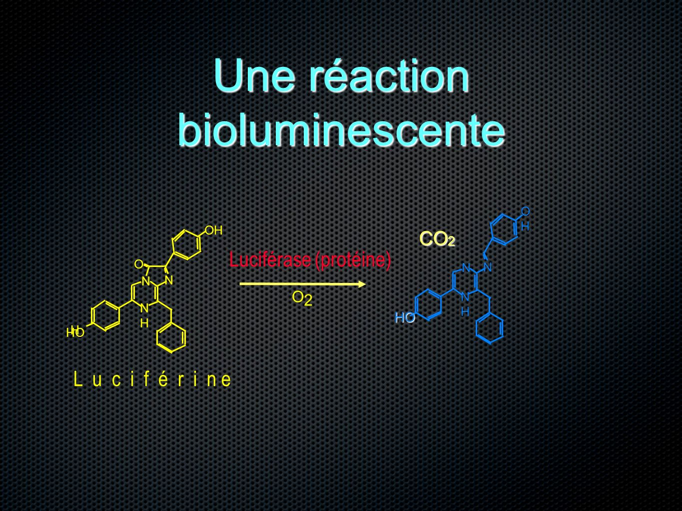 Une réaction bioluminescente
