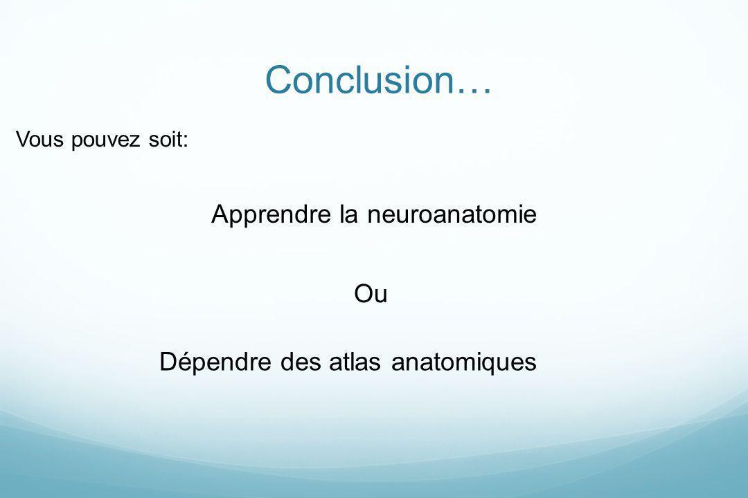 Apprendre la neuroanatomie