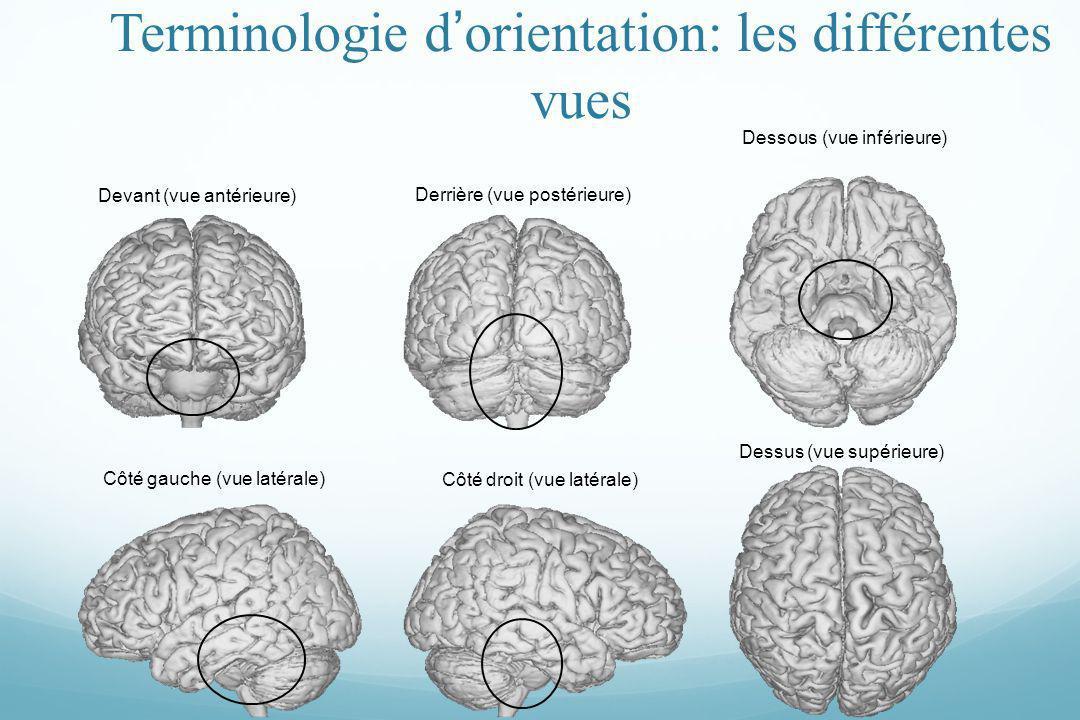 Terminologie d'orientation: les différentes vues
