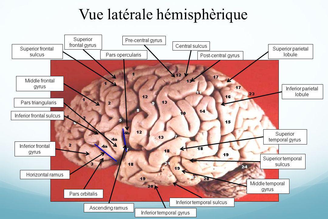 Vue latérale hémisphèrique