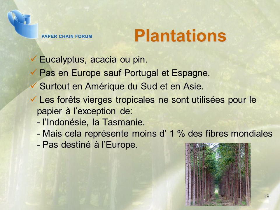 Plantations Eucalyptus, acacia ou pin.
