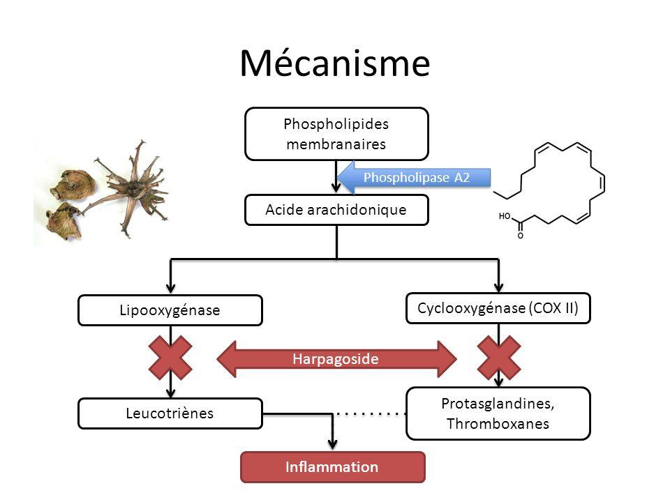 Mécanisme Phospholipides membranaires Acide arachidonique