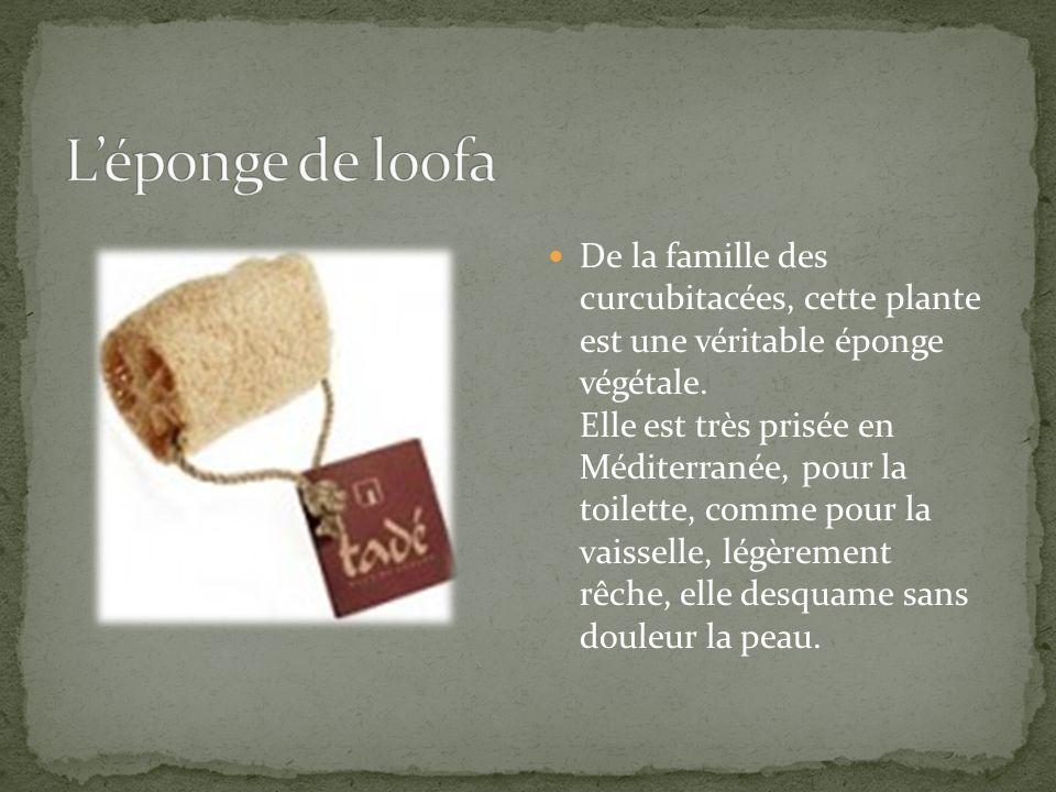 L'éponge de loofa