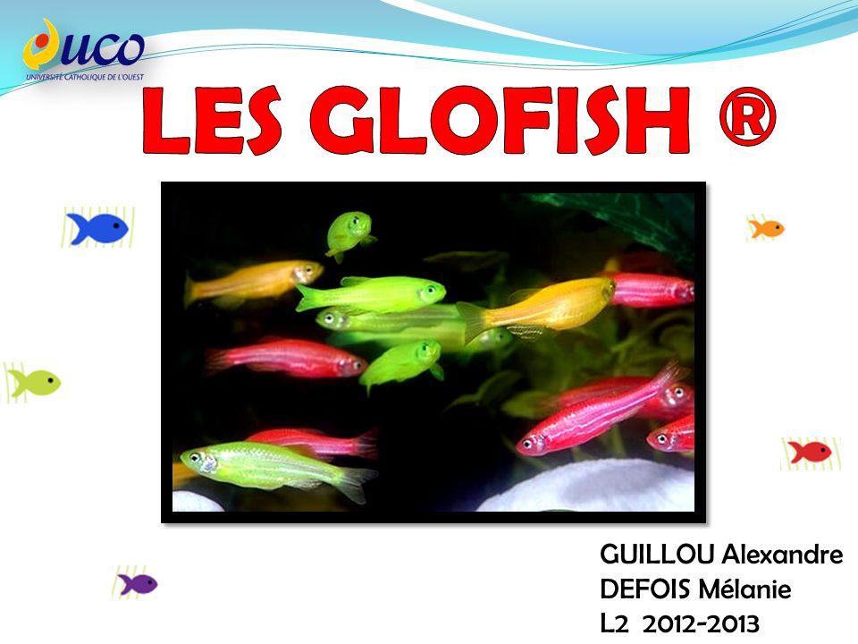 LES GLOFISH ® GUILLOU Alexandre DEFOIS Mélanie L2 2012-2013